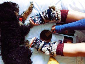 christmas socks and a dog